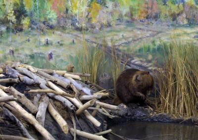 beaverlarge