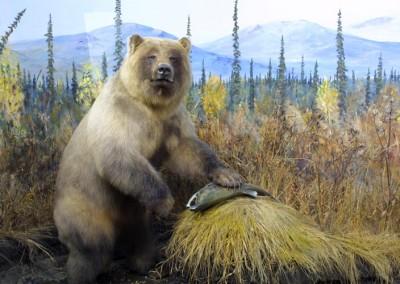 grizzlybearlarge