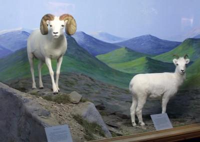 sheeplarge